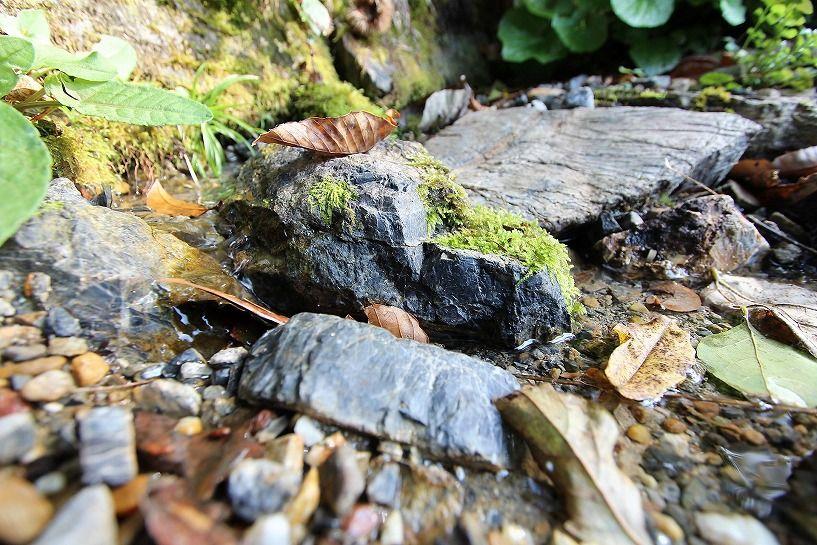 京丹波町妙楽寺石原古民家の湧き水の池アップ