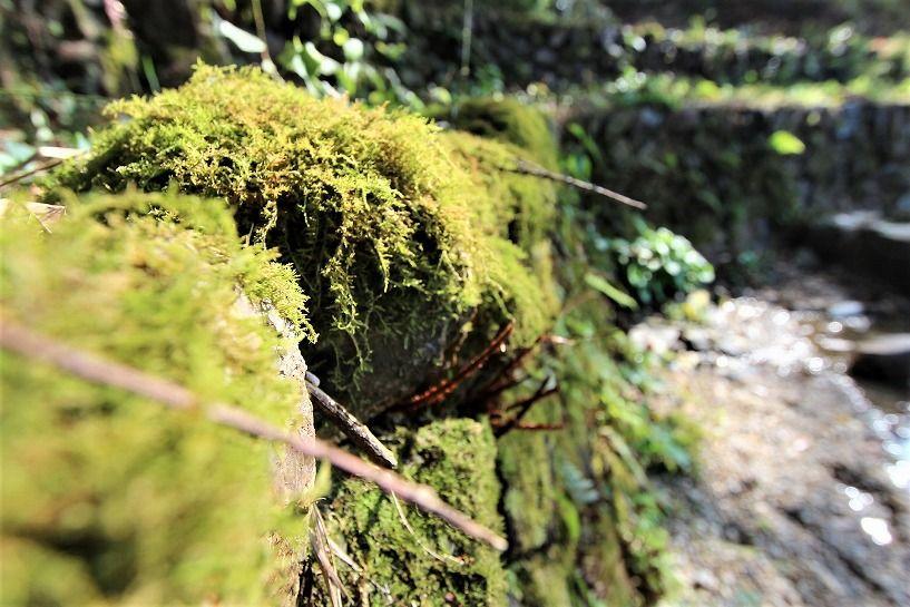 京丹波町妙楽寺石原古民家の苔生した石垣