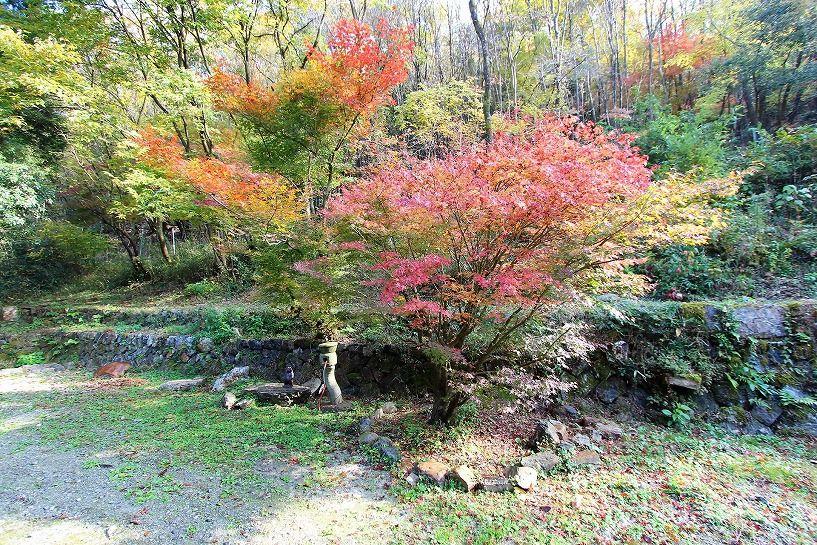 京丹波町妙楽寺石原古民家の庭の紅葉